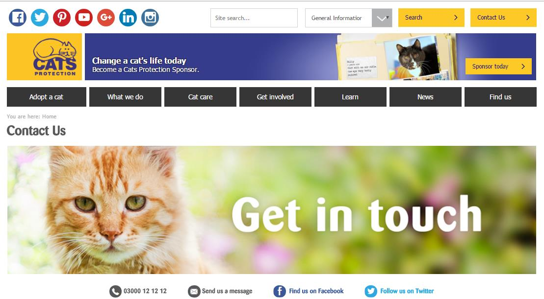 Email Address For Cats Protection Nottingham